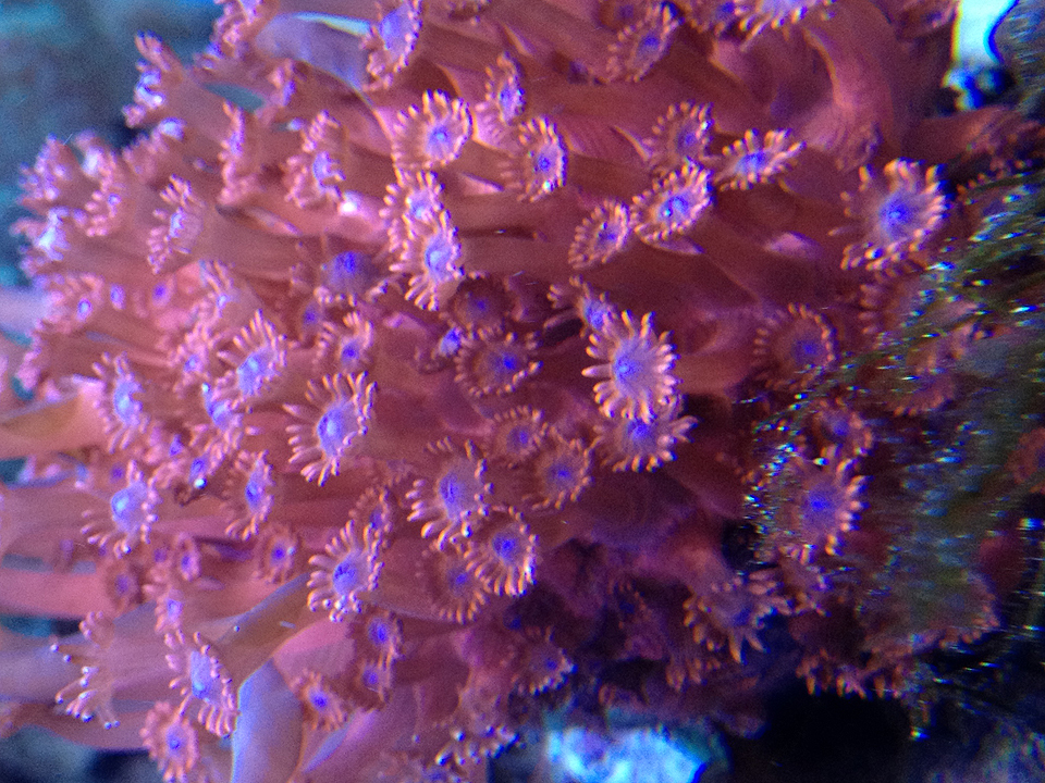 underwater-organisms-texture-form-fabric-mona-kim